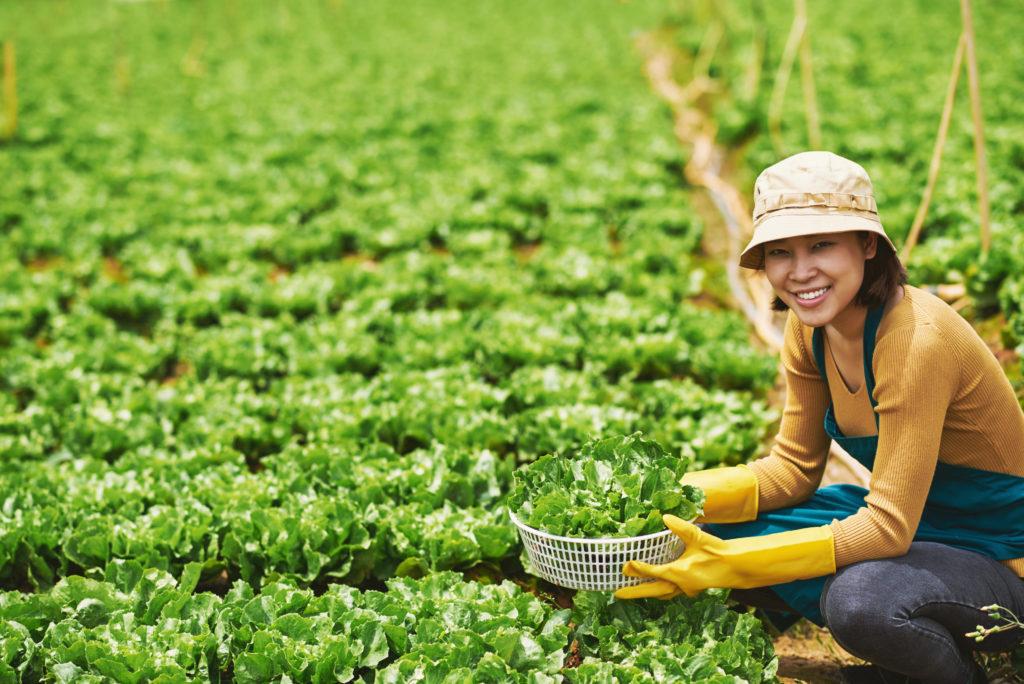 農家住み込み女性求人レタス農家