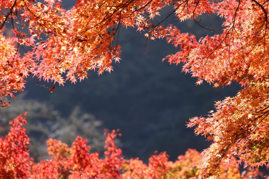 愛知県のリゾバ