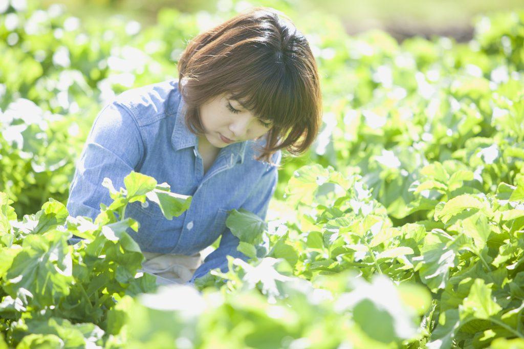 レタス農家のアルバイト