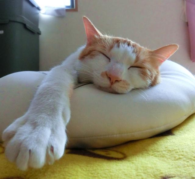 リゾートバイト昼寝猫