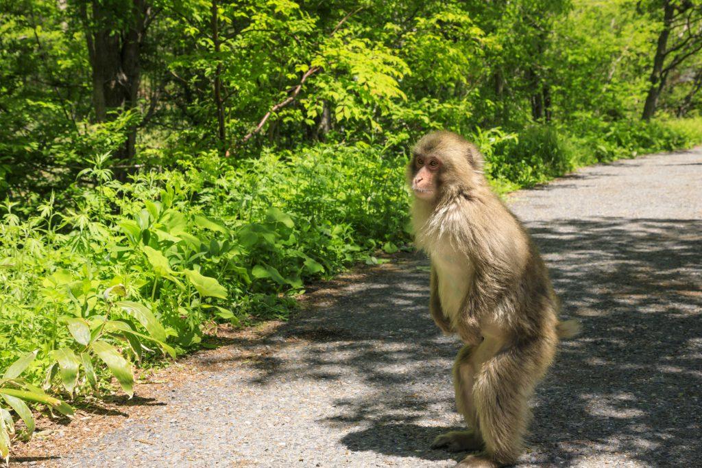 猿バイト上高地