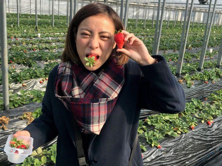 イチゴ農園でリゾバ休み