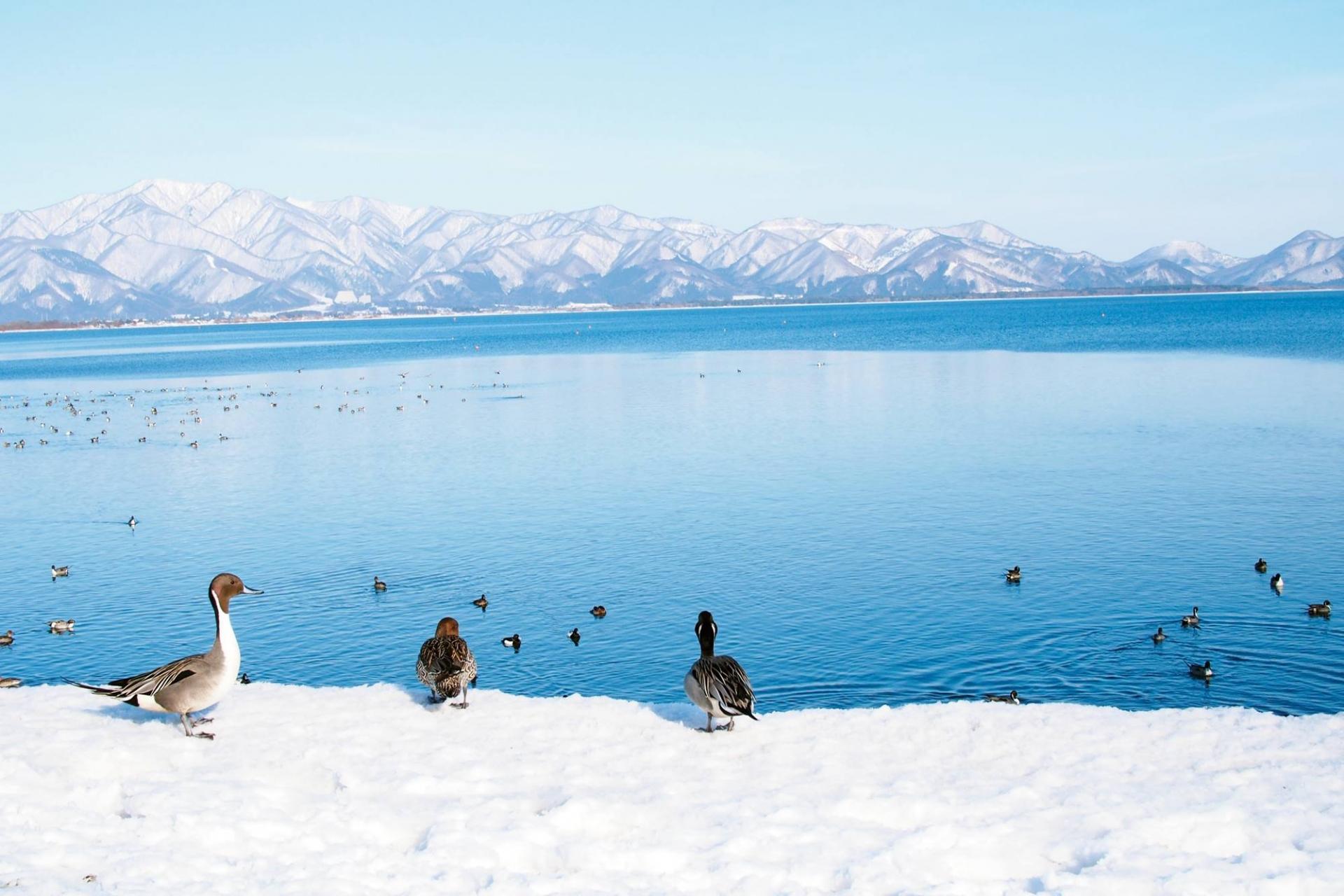 猪苗代・磐梯(東北・福島県)住み込みスキー場リゾートバイト求人案内